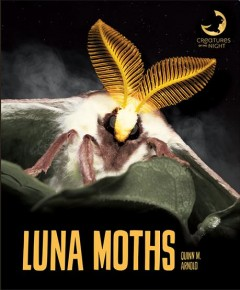 Luna moths by Arnold, Quinn M.