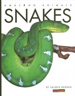 Snakes by Bodden, Valerie