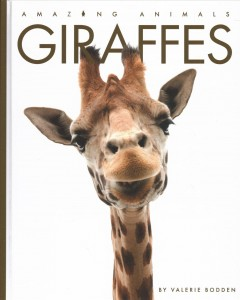 Giraffes by Bodden, Valerie